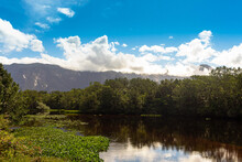 Landscape Of Lake With Trees And Water Hyacinths, In The Background Mountains Of Mantiqueira Mountains