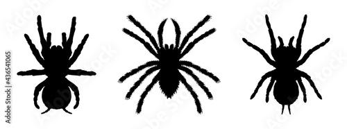 Fotografija tarantula icon