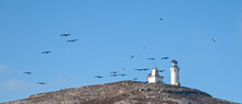 Anacapa Island Lighthouse With Pelicans Flying Overhead In The Channel Islands National Park Offshore From Santa Barbara California USA