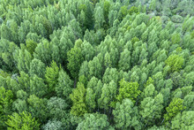 Aerial View Of Spring Forest Landscape. Natural Green Background. Drone Photography.