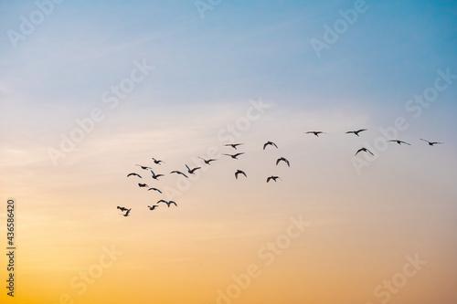 Carta da parati Vuelo de aves 3