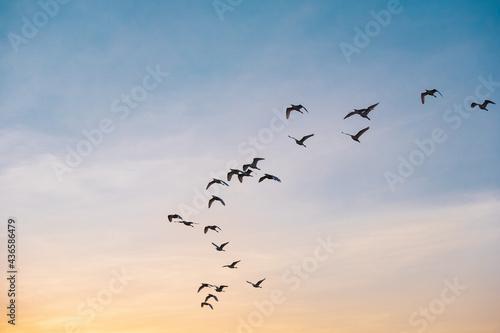 Stampa su Tela Vuelo de aves 3