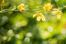 Yellow Flowers On The Branch