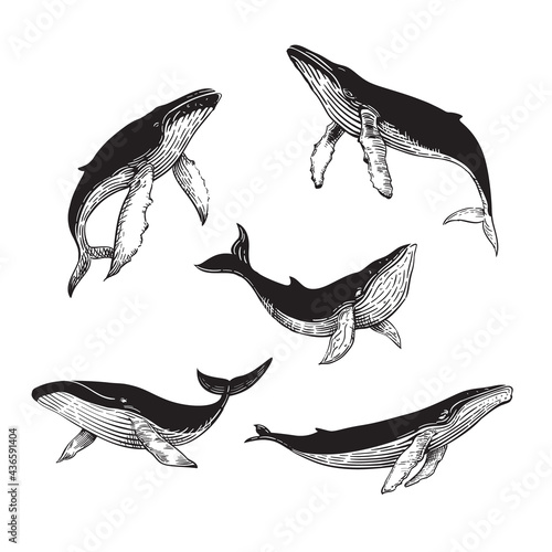The lineart whale collection, hand draw whale. Logo whale, whale logo