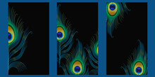 Set Of Templates For Stories With Peacock Feathers