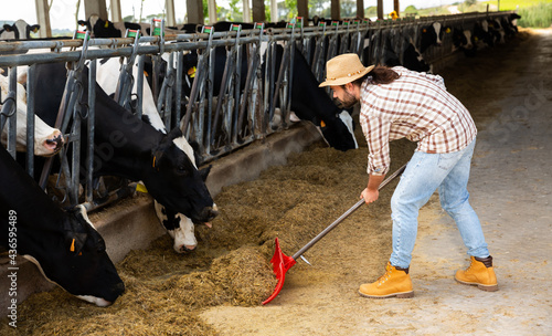 Fotografie, Obraz Confident young breeder feeding cows with hay in cowshed of dairy farm