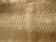 Texture Of A Genuine Leather Snake. Gold Python Skin. Snake Skin Background.