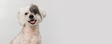 Portrait Of Cute Little Chinese Crested Dog Isolated On White Studio Background. Concept Of Beauty, Domestic Animal, Care. Flyer