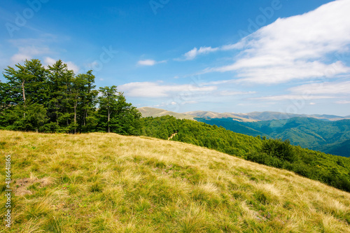 trees on the hillside meadow. beautiful mountain landscape in summer afternoon. clouds on the sky #436641865