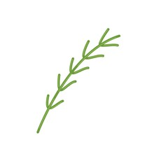Sprig Of Fresh Rosemary, Fragrant Herbs For Cooking, Vector Clipart In Flat Style, Isolate On White.