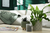 Beautiful potted plants, candle and magazines on wooden table indoors, space for text
