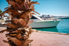 Palm Bark On The Background Of White Yachts Blurred In The Background