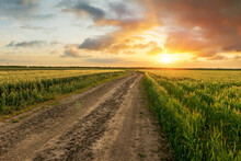 A Green Field Of Winter Wheat And A Dirt Road During An Intense Sunset. Agricultural Field In Sunlight