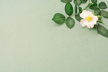 Creative Layout Made With Leaves, Wild Rose And Copy Space. Nature Concept. Flat Lay.