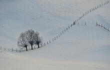 Winter Trees In Sirnea Village, Brașov Romania