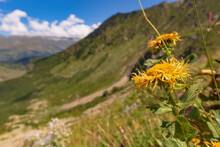 Yellow Mountain Flowers Against The Peaks Of Rocky Cliffs Against The Blue Sky Peek Out From The Tall Grass