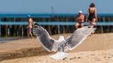 Fototapeta Fototapety z morzem do Twojej sypialni - Mewa w locie nad plażą i morzem