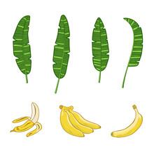 Bunch Of Bananas And Banana Leaves.
