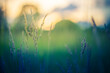 Leinwandbild Motiv Abstract sunset field landscape of grass meadow on warm golden hour sunset or sunrise time. Tranquil spring summer nature closeup and blurred forest background. Idyllic nature scenery