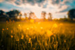 Leinwandbild Motiv Abstract sunset field landscape of yellow flowers and grass meadow on warm golden hour sunset or sunrise time. Tranquil spring summer nature closeup and blurred forest background. Idyllic nature