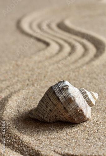 Billede på lærred Close-up, seashell on natural sand, patterns in the form of lines