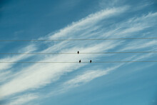 A Flock Of Birds Are Sitting On Electrical Wires. Black Birds On A Background Of Blue Sky. Russia. Day. Summer.