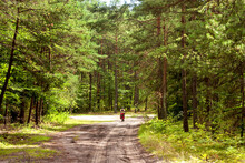 Summer Landscape - A Lone Cyclist Travels The Countryside Road Through The Forest In Eastern Poland