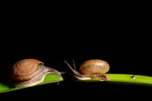 Up Closed Snails