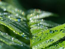 朝陽を浴びる雨の雫