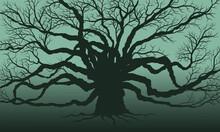 Big Trees Dead