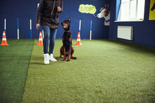 Obedient Dog Sitting By A Trainer During The Training Session