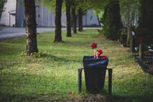 Tulips In Trash Can Near Graveyard. Tree Alley In Cemetery