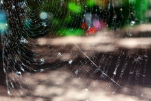 Spider Web With Natural Background . Cobweb Hanging In The Air