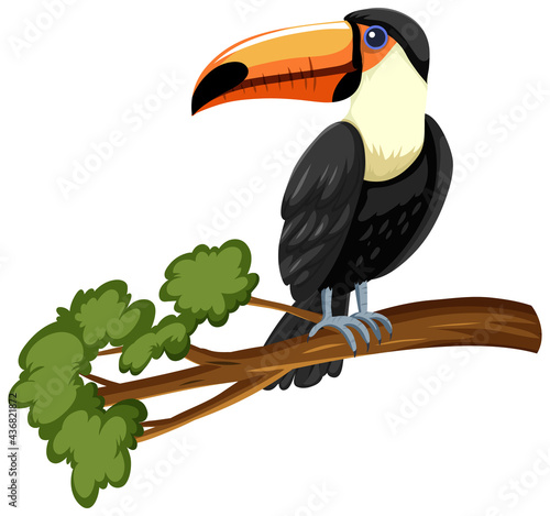 Carta da parati Toucan bird on a branch isolated on white background