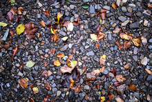 Colourful Wet Pebble Stone In Stream Water With Autumn Falling Leaf Background