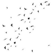Silhouette Of Flying Flock Of Birds Vector