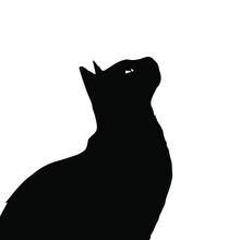Silhouette Of A Black Cat Looking At The Sky. Vector Illustration Is Subject To Editing.