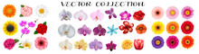 Set Of Flowers Bouquets. Flower Clipart.  Colorful Flowers