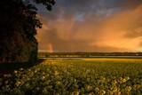 Fototapeta Rainbow - Rzepak i tęcza