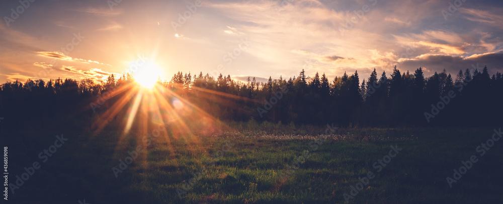 Leinwandbild Motiv - olezzo : Bright beautiful sunset in a summer forest