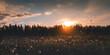 Leinwandbild Motiv Beautiful summer landscape. Bright sunset with orange sun overlooking a field with white fluffy wildflowers. Panorama banner