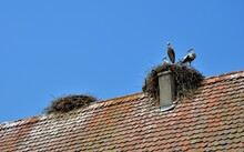 Nest On The Roof