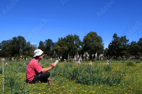 Carta da parati A naturalist draws white asphodel plants (Asphodelus albus)
