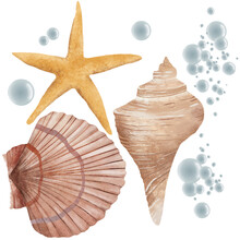 Set Of Various Beautiful Mollusk Sea Shells, Illustration Isolated On White Background. Realistic Hand Drawing Of Seashells Like Conch, Oyster, Spiral, Clam And Mollusk Shells