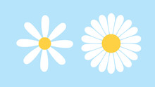 White Cosmos Flowers With Yellow Stamens Isolated On Blur Background ,Vector Illustration EPS 10