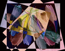 A Tracery Of Colorful Bird Feathers Is Set Against A Pink-lilac-black Background. Abstract Fantasy. 3D Render.