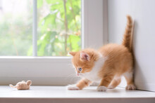 Red Kitten Playing With A Toy Mouse