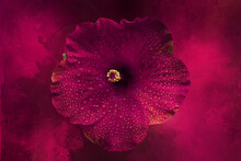 Deep Pink Hibiscus In A Deep Red-pink Backdrop