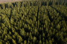 Aerial View Of Trees In A Wood In Manhay, Luxembourg, Belgium.