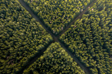 Aerial View Of Hunting Crossroad Through Thick Forest, Érezée, Belgium.